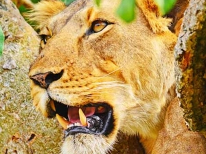 Murchison Falls National Park tour Photos
