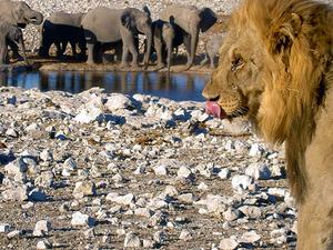 3 Day Etosha Namibia Tour Photos