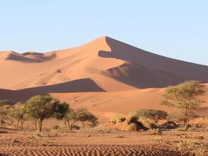 Namibia Safari Fotos