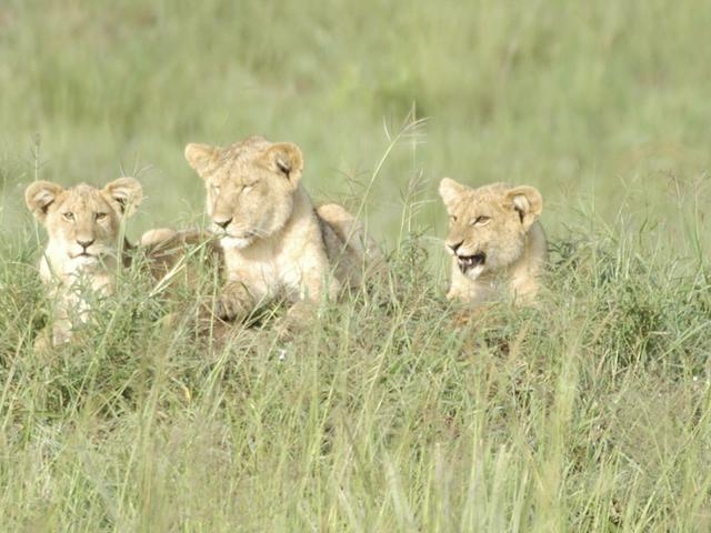 12-Day wonders of northern Uganda safari Photos