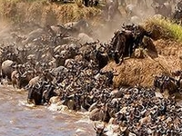 The Great Migration in Masai Mara