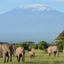 Annesafari