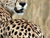 3 Days Spectacular Masai Mara Private Safari