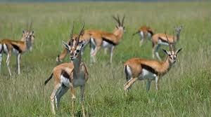 2 Days Maasai Mara Overnight Shared Safari Fotos