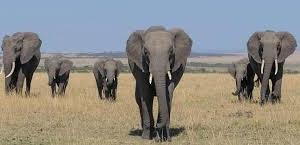5 Days Masai Mara, Nakuru, Naivasha Group Joining Safari Fotos