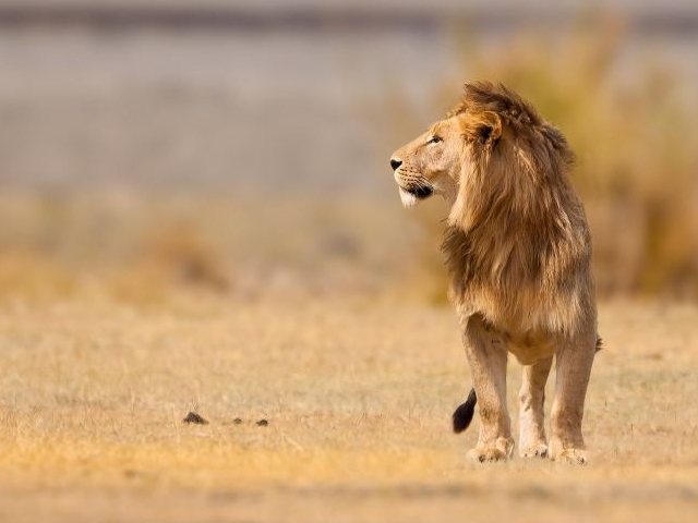 Simba Safari Mid-Range Photos