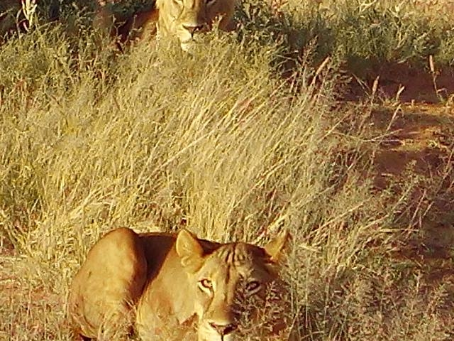 7 Days 6 Nights Samburu,Ol Pejeta,Lake Nakuru and Masai Mara Photos