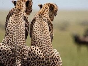 Serengeti And Ngorongoro - 3 Days Camping Tour Fotos