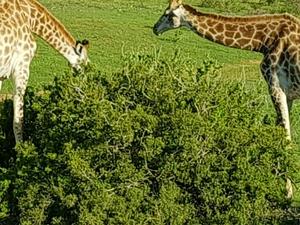 Kruger Park Photos