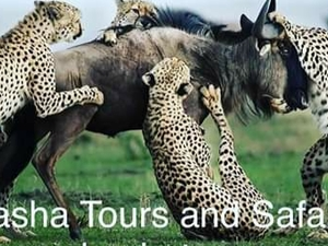 5 Days Safari to Tanzania National Photos