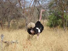 Lake Abijata Shalla National Parkostrich
