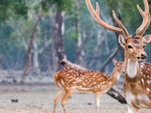 Visit Sundarban Tour And Travels For Low Cost