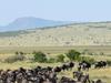 3 Days Masai Mara Migration Safari