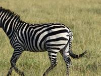 11Days Kenya and Tanzania Wildlife Adventure Camping Safari