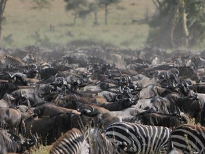 Big Discount on the Great Migration. Serengeti (June 2020) Photos