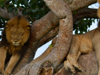 5 Days Queen Elizabeth and Lake Mburo Adventure