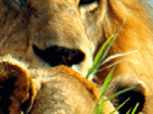 The Big 5 And Birding Safari Photos