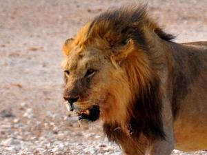 3 Day Etosha National Park (Lodging) Photos