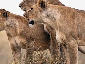 Explore Serengeti, Ngorongoro, Tarangire & Lake Manyara
