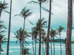 Best of Ceylon Photos