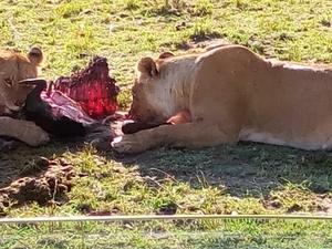 Group Joining Safari Deal Photos