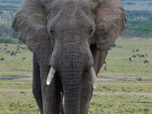 6 Days Maasai Mara,L.Nakuru,L. Naivasha,L.Bogoria Lodge Safari Photos
