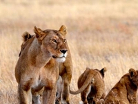 5 Day Tanzania Budget Camping Safari
