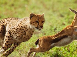 Masai Mara - Lake Nakuru - Lake Naivasha Safari Photos
