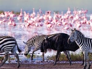 Masai Mara, Lake Nakuru 4 Days Luxury Tour Fotos