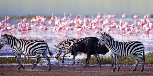 Masai Mara, Lake Nakuru 4 Days Luxury Tour Photos