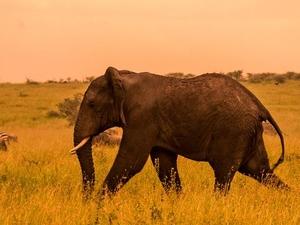 3 Days Tanzania Camping/Lodge Safaris Short and Sweet Photos