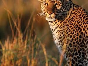 3 Days Tanzania Lodge Safaris Mikumi & Udzungwa Photos