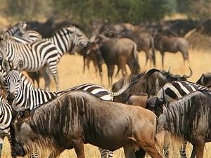4 days Tarangire, Serengeti and Ngorongoro