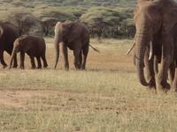 Elephant Family In Tarangire By Deko