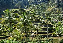 Tour Pacages List In Bali