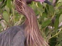 Circuitos Para La Observación De Aves