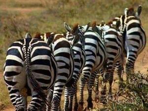 Tanzania Safari & Zanzibar Photos