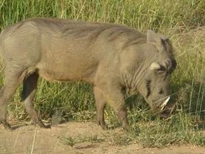 Tanzania Southern Safari Photos