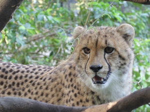 Cheetah's Rock, Zanzibar