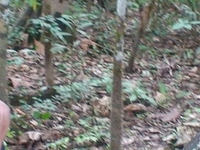 Boa Constrictor Taming
