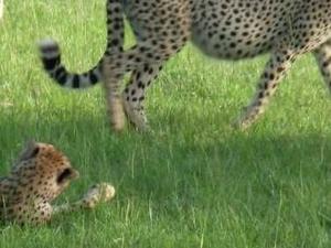5 Days Masai Mara & Lake Nakuru National Park Photos