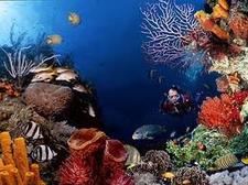 Gili Diver