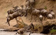 Sksn 4 Days Maasai Mara Camping Migration Safari