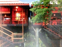 No 1 Luxury Tree house in Periyar...............