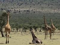 Africa Safaris, 2Boys Tours