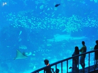SEA Aquarium/Sinagapore