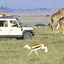 Masai Mara1