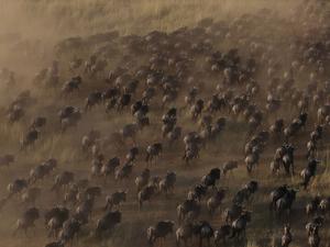 Wildebeest Migration Offers Fotos