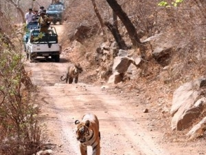 Rajasthan Wild Life Heritage Tour Photos