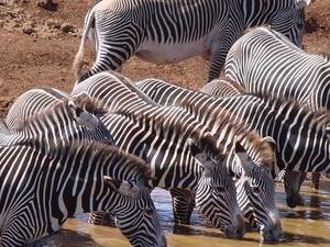 Maasai Mara Budget Safari Photos
